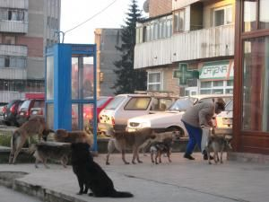 Câinii, motiv de dispută între vecini