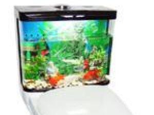 Toaletele cu acvariu încorporat - o soluţie eficientă împotriva lipsei de spaţiu şi a risipei de apă