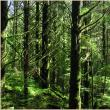 """""""Pădurile viitorului"""""""