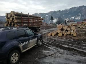 Peste 100 de controale efectuate de Garda Forestieră Suceava de la începutul lunii martie