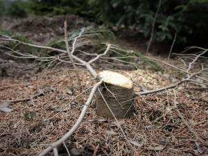 Amenzi de peste 56.000 de lei şi material lemnos de peste 42.000 de lei confiscat, în cadrul unei acţiuni de combatere a delictelor silvice