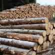 Aproape 200 de amenzi date în cadrul unor controale în domeniul lemnului