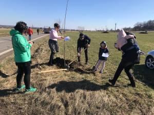 Peste 100 de cireşi au fost plantaţi pe marginea drumului către Putna